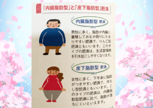 内臓脂肪型肥満と皮下脂肪型肥満